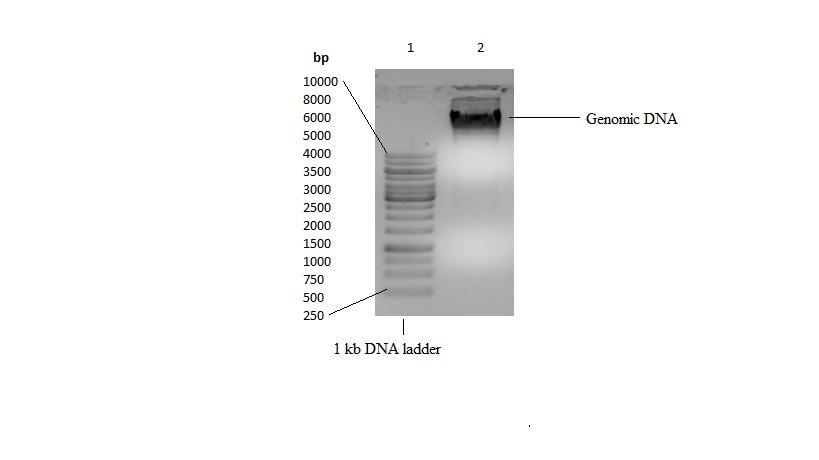 g DNA paint.jpg