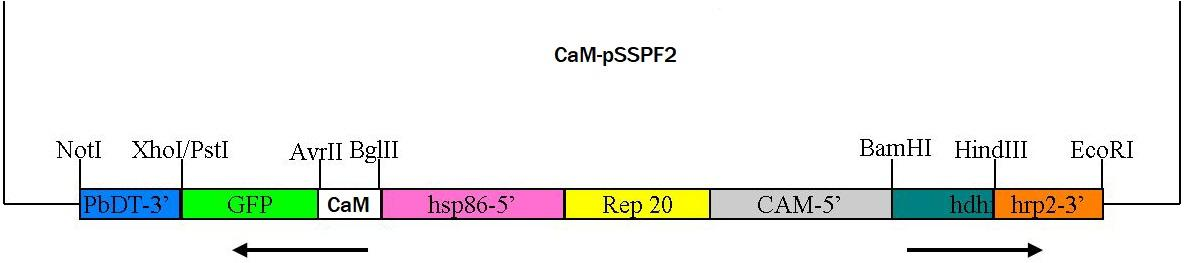 Vector map for CaMpSSPF2 .jpg