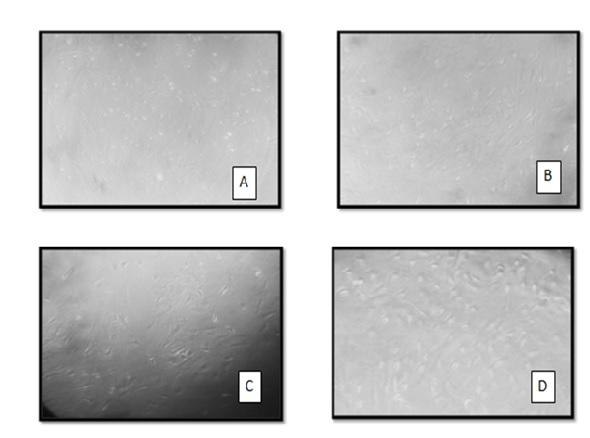 microscope images.jpg