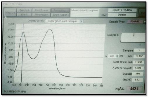 result RNA.jpg