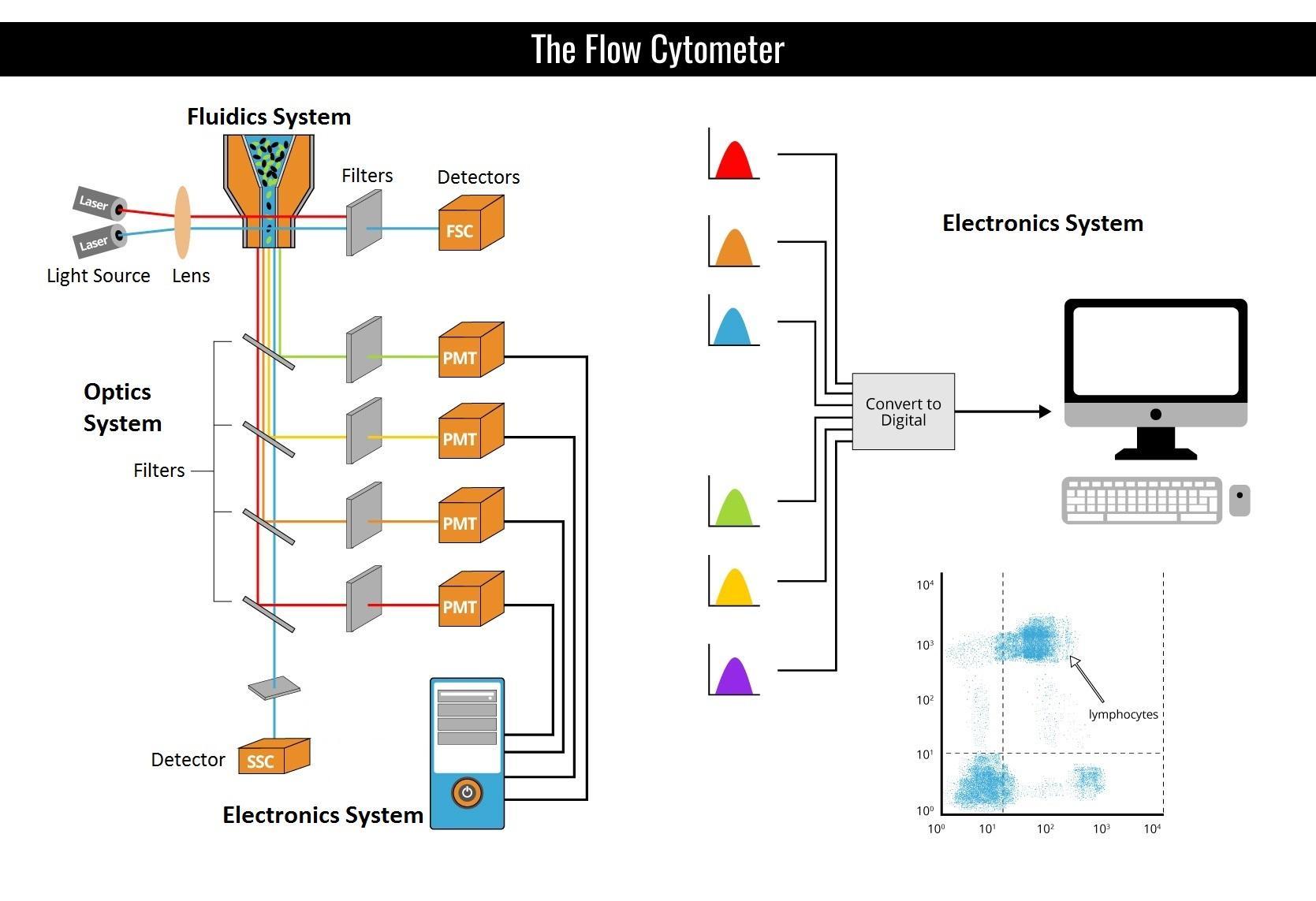 The_Flow_Cytometer.jpg